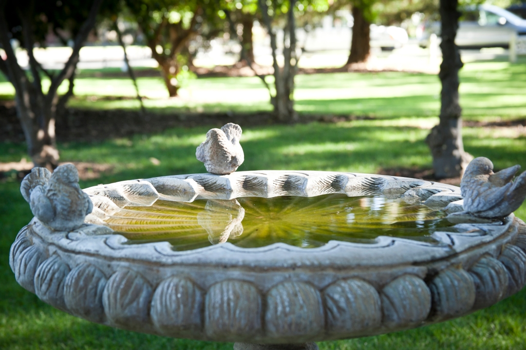 How cute is this bird bath?
