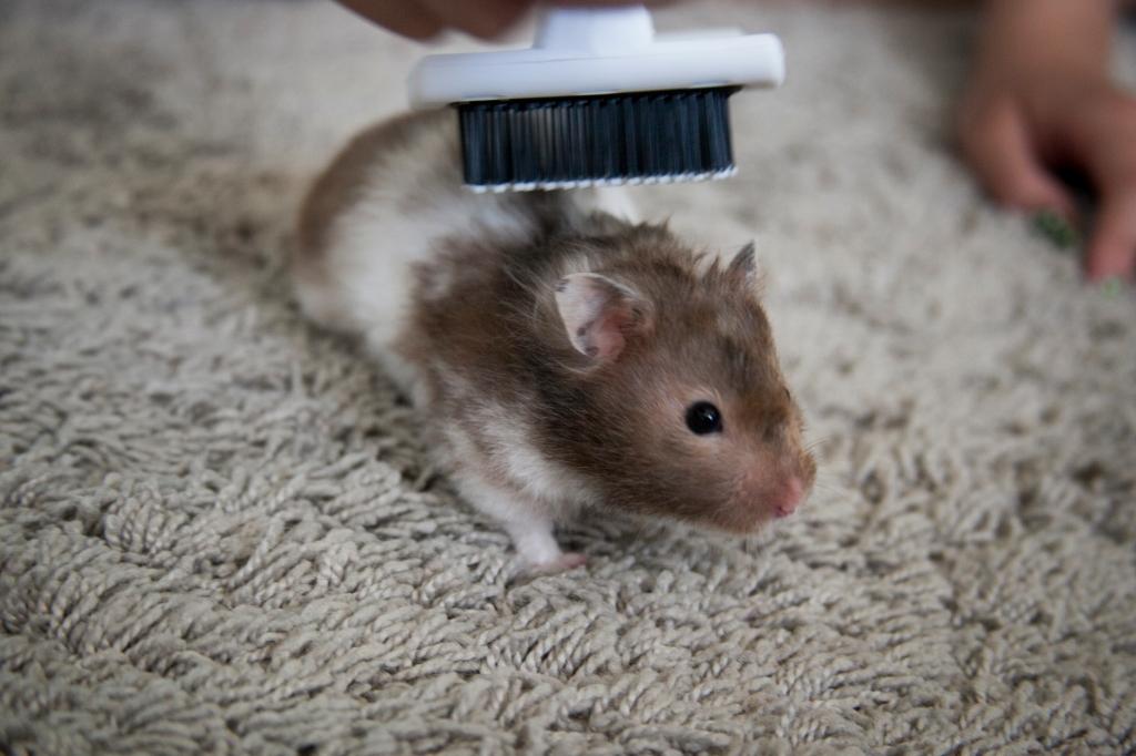 Tilly getting groomed for her shoot.