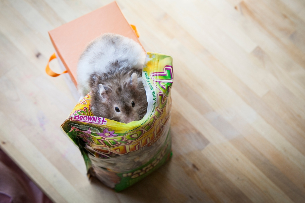 Tilly doesn't usually get to climb into her snack bag but the shoot was special and I think she knew it.