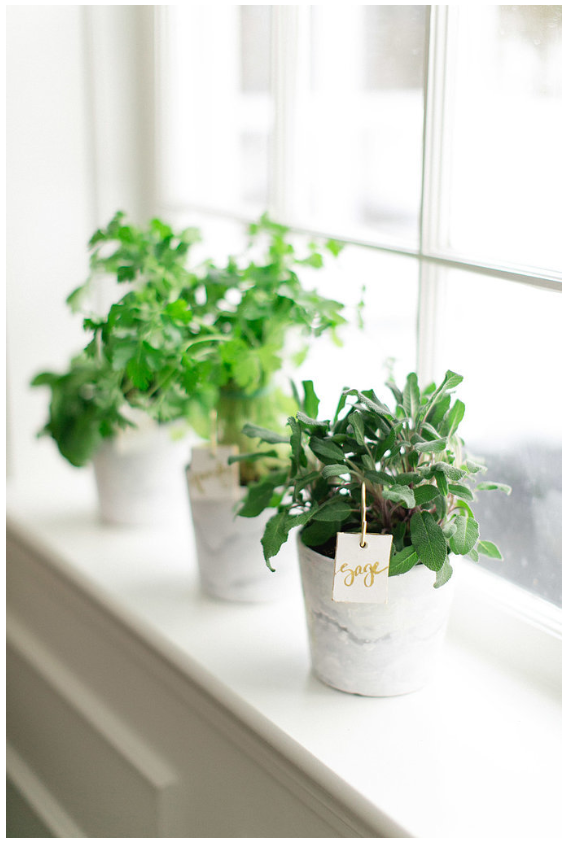 I'm not a big plant person because I tend to kill them. After buying some for our house this month, I've realized I may actually be able to keep them alive after all! Excited about bringing them into a smaller space. I love them and they make a big difference. http://www.stylemepretty.com/living/gallery/picture/1385803/