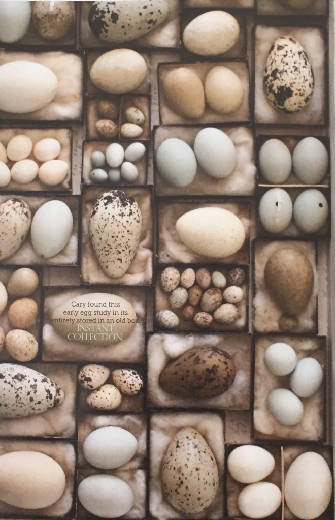 I really like the idea of natural tones with pops of blues, greens, and yellows in desaturated tones. Here it is, and how can I resist the eggs? I found this in a magazine, Matthew Mead Decorating.