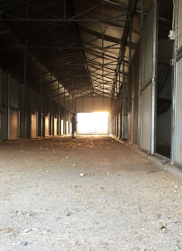 We walked through the barn and when we opened the doors to the setting sun and beautiful fields I started crying. I just can't believe we did this. Things this great just don't happen to us.