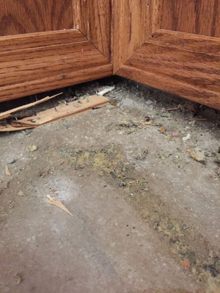 This is under the dining room base boards. There is no door in this room and people eat here...